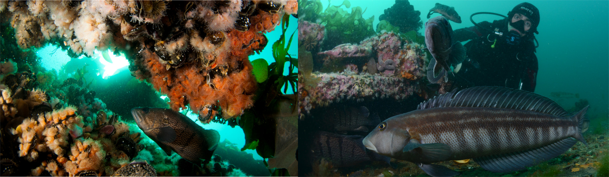 Diving sites Abramar Buceo