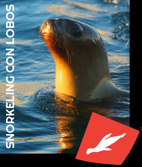 Abramar Snorkeling con lobos